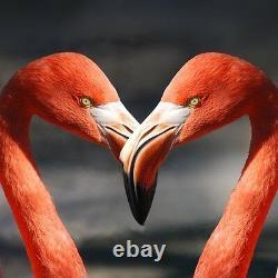 60x60 cm Wall Art Glass Print Picture New Flamingo Love Bird Heart p39627