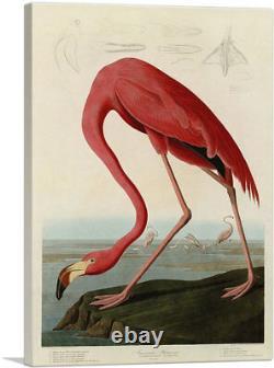 ARTCANVAS Pink American Flamingo Canvas Art Print by John James Audubon