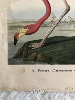 Audubon Flamingo #16 rare vintage print signed by Botsford-1949, 9.25 x 7 in