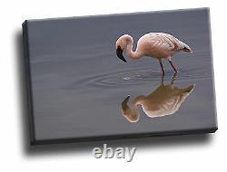 Lesser Flamingo, Lake Nakuru National Park Giclee Canvas Bird Life Picture Art