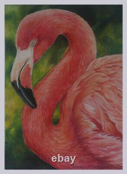 Pink Flamingo Marsh Nautical Bird Realism Pastel painting artist D. Dellinger